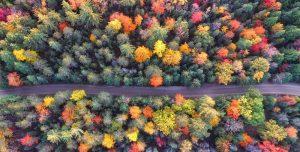 lascia cadere le foglie