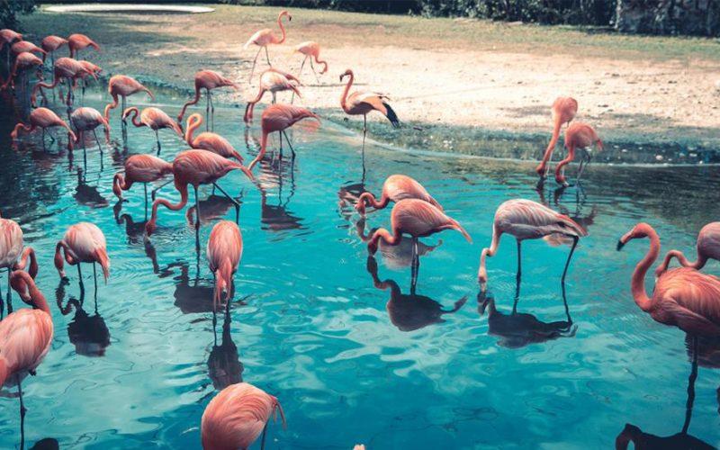 Le piume rosa dei fenicotteri
