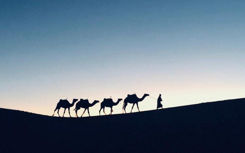 Il sorpendente dono di un cammello