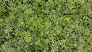 Come la foresta amazzonica