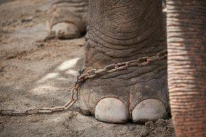 L'elefante e il paletto